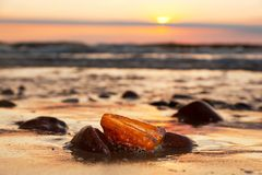 Янтарный камень на пляже Драгоценный самоцвет, сокровище прибалтийская эстония около somethere tallinn моря Стоковое фото RF