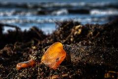 Янтарный камень на пляже стоковые фотографии rf