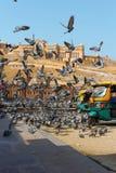 Янтарный форт, Jaipur, Индия Стоковые Изображения