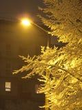 янтарный январь Стоковое Изображение