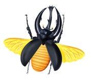 японец летания черепашки жука Стоковое Фото