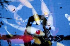 Японец оправляется природа животных аквариума рыб Стоковое фото RF