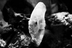Японец оправляется природа животных аквариума рыб Стоковое Изображение