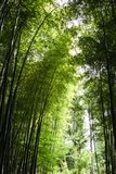 Япония, Киото, Arashiyama, взгляд бамбукового леса стоковые изображения