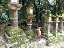 япония nara Висок Todaiji Стоковые Изображения RF