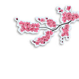 Японская вишня brampton Отрежьте из картона с тенью На белой предпосылке иллюстрация бесплатная иллюстрация