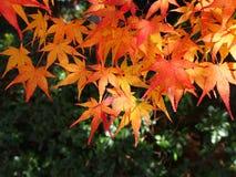 Японская листва осени в Киото Стоковая Фотография