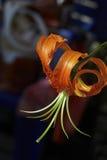 японская лилия Стоковые Изображения RF