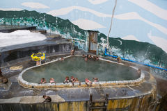 Японская макака обезьяны снега в На-sen горячего источника, Hakodate, Японии Стоковые Изображения