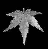 японская прессформа клена листьев Стоковые Фото