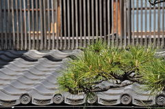 Японская традиционная архитектура и сосна Стоковое Изображение