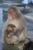 японские детеныши macaque Стоковые Фото
