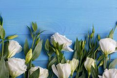 Японские розы лежат в ряд конец-вверх на белой деревянной предпосылке Стоковые Изображения