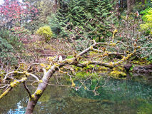 Японские сады Портленд Орегон Стоковое Фото
