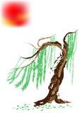 Японские сосенка и солнце Стоковое Фото