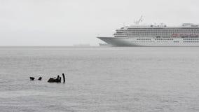 Японские Touristic ветрила Asuka II вкладыша круиза в Тихом океане сток-видео