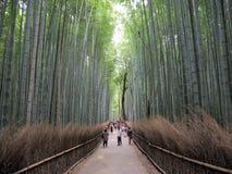 Японский бамбуковый лес Стоковые Изображения