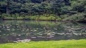 Японский пруд с пусковыми площадками лилии и славный взгляд леса на заднем плане Стоковая Фотография RF