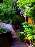 Японский сад в моей задворк в Santa Cruz стоковая фотография rf