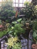 Японский сад на ботанических садах Стоковые Фото
