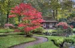 Японский сад стоковые фото
