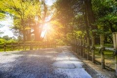 Японский сад в утре Стоковая Фотография RF