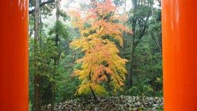 Японский сад и японская листва осени Стоковые Фото