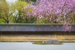 Японский сад с розовым деревом Сакуры Стоковое Изображение