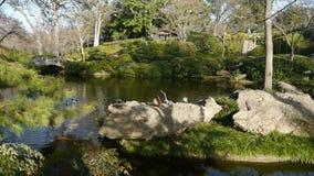 Японский сад Стоковое Изображение RF