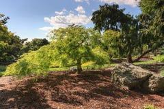 Японский сад Hershey Пенсильвания Стоковые Фотографии RF