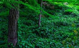Японский уклон леса стоковое фото