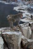 Японский Macaca Fuscata обезьяны снега водным бассейном стоковая фотография rf