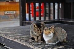 2 японских кота имея разногласие на деревянном поле Стоковая Фотография RF