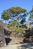 Японское дерево и шаги Стоковые Изображения
