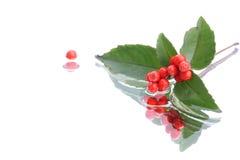 Японское glabra sarcandra на предпосылке 2 воды Стоковое Изображение RF