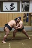 Японское sumo на тренировке sumo Стоковые Фотографии RF
