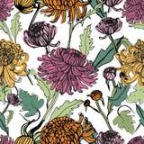 Японской картина хризантемы нарисованная рукой безшовная с бутонами, цветками, листьями Красочная винтажная иллюстрация стиля Стоковые Фото