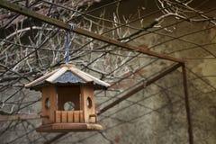 ярд белизны США дома заднего цвета птицы голубого вися красный Стоковое Изображение