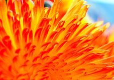 Яркая абстрактная предпосылка цветка лепестков астры Стоковое фото RF