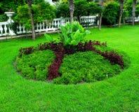 Яркая ая-зелен декоративная лужайка стоковая фотография