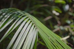 Яркая ая-зелен польза текстуры лист пальмы для предпосылки Стоковые Изображения RF