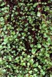 Яркая ая-зелен предпосылка лист Стоковые Фотографии RF