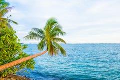Яркая ладонь на предпосылке моря Стоковое Фото