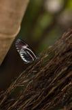 яркая бабочка Стоковые Фото