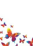 яркая белизна бабочки Стоковые Изображения RF
