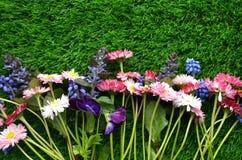 яркая весна цветков Стоковые Фотографии RF