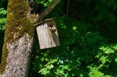 Яркая деревянная коробка вложенности на дереве на летнем дне Стоковое Фото
