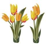 Яркая желтая и оранжевая иллюстрация вектора тюльпана Стоковое Фото