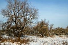 яркая зима дня Стоковое фото RF