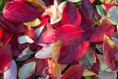 Яркая листва Стоковая Фотография RF